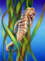 Seahorse in the Reeds