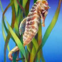 Seahorse in the Reeds by Nancy Tilles