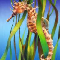 Seahorse in the Reeds II by Nancy Tilles