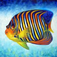 Royal Angelfish by Nancy Tilles