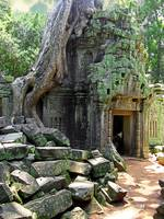 Te Prohm Temple Overgrown Ruins 4