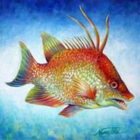 Hogfish Snapper by Nancy Tilles
