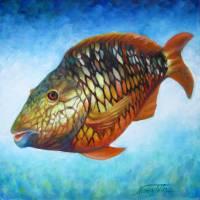 Juvenile Parrot Fish by Nancy Tilles