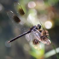 Sparkler over the Pond by Carol Groenen