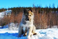 puppy on the snow 1