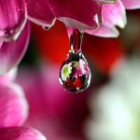 Reflecting in Water Drop by Laura Mountainspring
