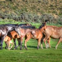 And A Little Horse Shall Lead Them by Jim Westin