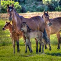We Are Family by Jim Westin
