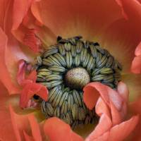 A Little Piece of Heaven by julie scholz
