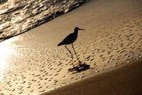 bird on beach