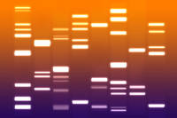 DNA Art Orange Purple