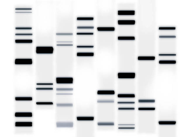 DNA Art Black on White
