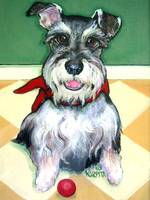 Schnauzer with Red Ball - Cute Funny Dog