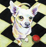 Sandy Man - Funny Dog White Chihuahua Red Ball