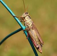 Grasshopper Scoping