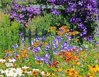 Country Garden Explosion of Color