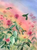 Hummingbird Rainbow by Sharon Himes