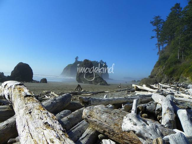 Pacific Beach - Olympic National Park