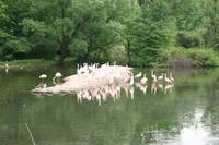 111 - Flamingoes