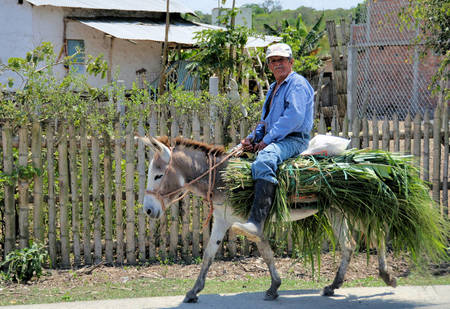 On Donkey with Collected Grasses