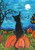 Cat in pumpkin patch