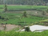 Indonesian Farmland