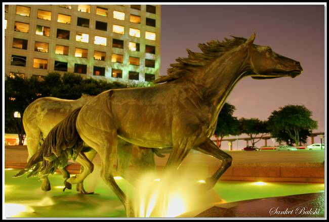 Mustangs of Las Colinas at Night