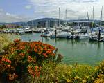 Bellingham Harbor with Flowers by Allen Sheffield