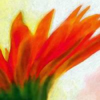 Orange Flower Art Prints & Posters by Brett Carlis