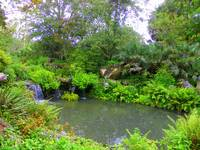 Botanical Water Garden I