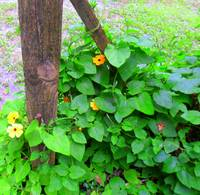 Fence Post Flower Vine
