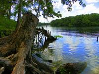 Suwannee River Wood I