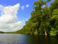 Suwannee River Summer I