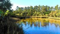 Lower Suwannee Wildlife Refuge TN I