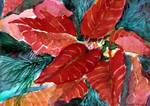 Deep Red Poinsettia