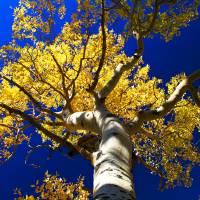 Fall Tree Art Prints & Posters by Matthew Farley