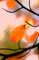 Autumn Light & Bokeh 1