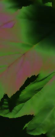 Leaf Abstract 1197