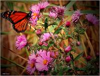 Butterfly and wildflowers 2