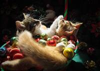 Two Christmas Kitty Cats Kittens Waiting for Santa