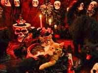 Halloween Kitteh Cats Hanging Out,Haunted House