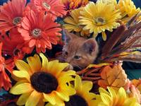 Tabby Kitty Cat Kitten Peeking Out,Flower Basket