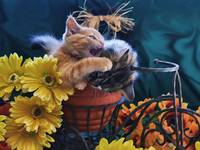 Tabby Kitty Cat Kitten Profile,Fall Colors,Flowers