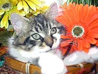 Kitty Cat Kitten Relaxing,Large Eyes,Fall Flowers