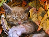 Sleeping Tabby Kitty Cat Kitten,Paw Stretched Out
