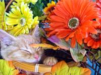 Tabby Kitty Cat Kitten Dreaming,Fall Flower Basket