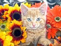 Cute Sunflower Kitty Cat Kitten,Blue Eyes,Portrait