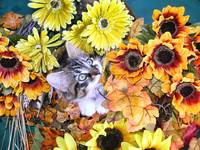 Kitty Cat Kitten Eating Plant,Autumn Flower Basket