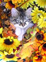 Cute Kitty Cat Kitten, Paws Crossed, Flower Basket