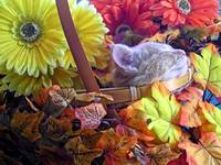 Chin Up - Kitty Cat Kitten Napping, Flower Basket